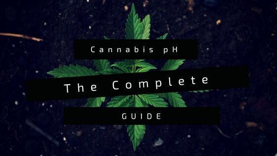 Cannabis pH