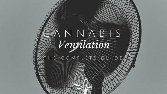Cannabis Ventilation