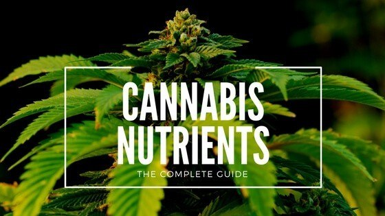 Cannabis nutrients