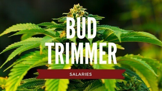 bud trimmer salaries