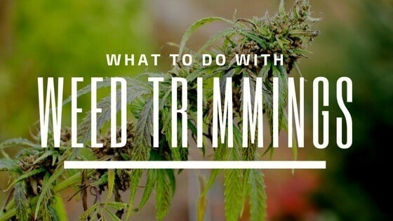 what to do with weed trimmings