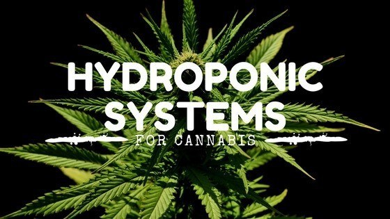 Best Hydroponic System for Weed