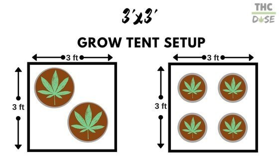 So ultimately it will depend on if youu0027d rather grow two large plants or four medium-size plants.  sc 1 st  THCoverdose.com : cannabis grow tent setup - memphite.com