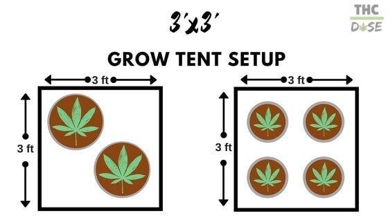 plant layouts