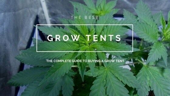 & The Best Grow Tent: Grow Your Cannabis in the Perfect Environment