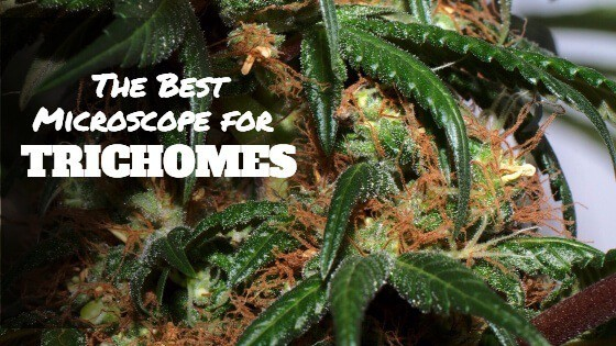 The Best Magnifying Gl For Trichomes