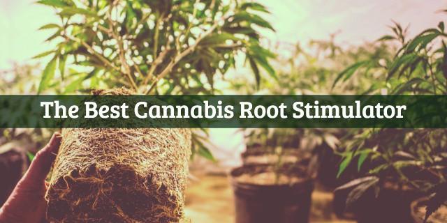Best Cannabis Root Stimulator