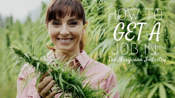 How to get a job in the marijuana industry