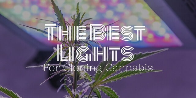 Best light for cloning cannabis