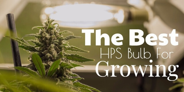 Best HPS Bulbs For Growing