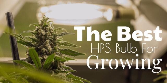 Best HPS Bulbs For Growing