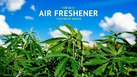 The Best Air Freshener For Weed Odor Eliminator That