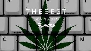 Best Cannabis Forum