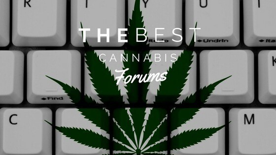 Best Cannabis Forum