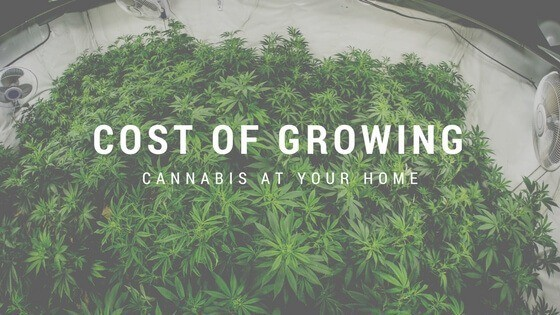Cost of Growing Weed