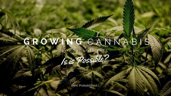 Growing Cannabis Without Nutrients