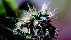 Best Cannabis Grow Book