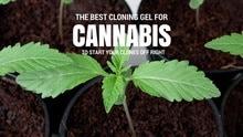 Best Cloning Gel for Cannabis