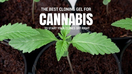 Best Cloning Gel for Cannabis