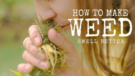 How to Make Weed Smell Better