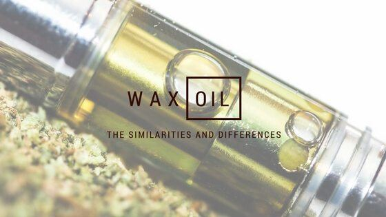 Wax vs Oil