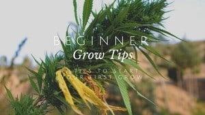 Beginner Grow Tips