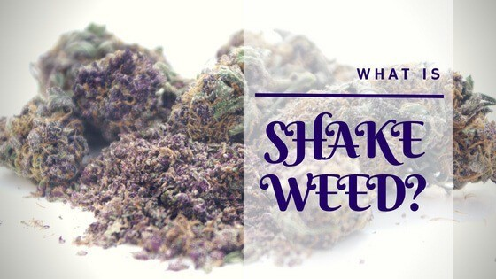 What is Shake Weed