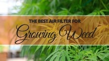 Best Air Filter for Growing Weed