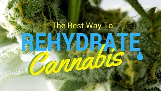 Best Ways to Rehydrate Weed
