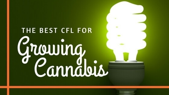 Best CFL for Growing