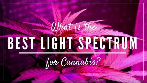 What is The Best Light Spectrum for Cannabis