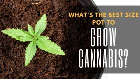What is the Best Size Pot to Grow Cannabis