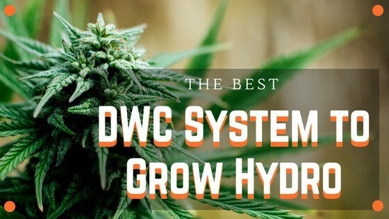 Best DWC System