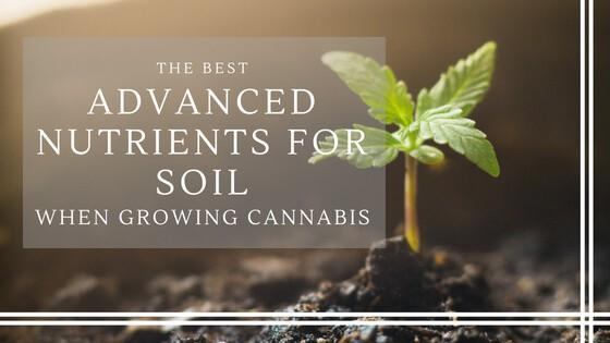 Best Advanced Nutrients for Soil