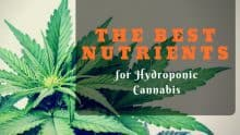 Best Nutrients for Hydroponic Cannabis