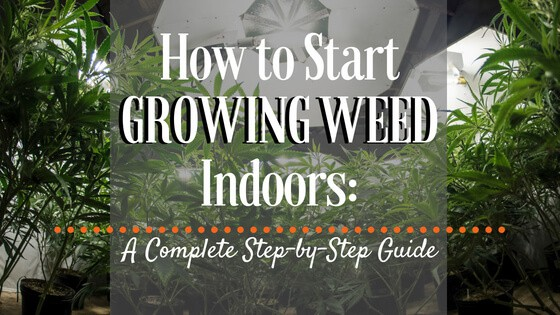 How to Start Growing Weed Indoors