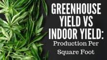 Greenhouse Yield vs Indoor Yield