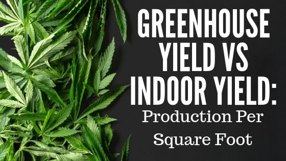 Greenhouse Yield vs Indoor Yield