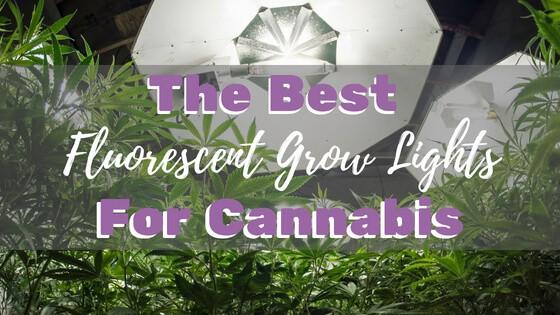 Best Fluorescent Grow Lights for Cannabis