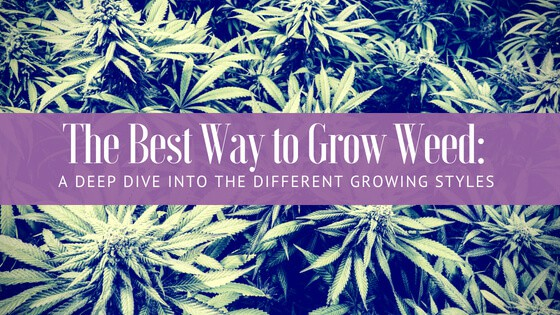 Best Way to Grow Weed