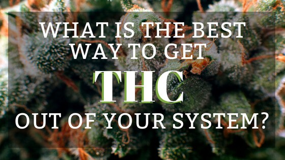 Best Way to Get THC Out of Your System
