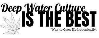 Deep Water Culture Hydroponics