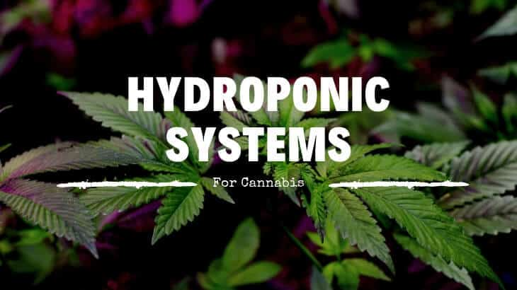 hydroponic system for Growing Cannabis
