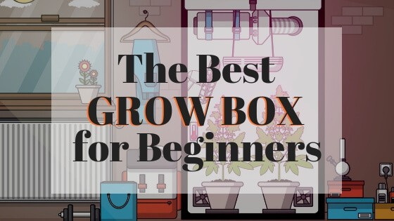 The Best Grow Box for Beginners (1)