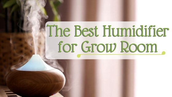 Best Humidifier for Grow Room
