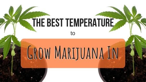 Best Temperature to Grow Marijuana