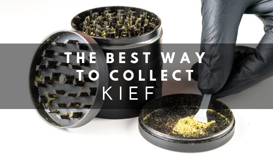 Best Way to Collect Kief