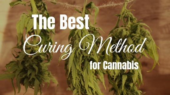 Best Curing Method for Cannabis
