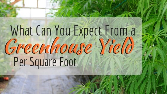 Greenhouse Yield Per Square Foot