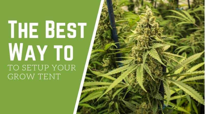 How to setup your grow tent